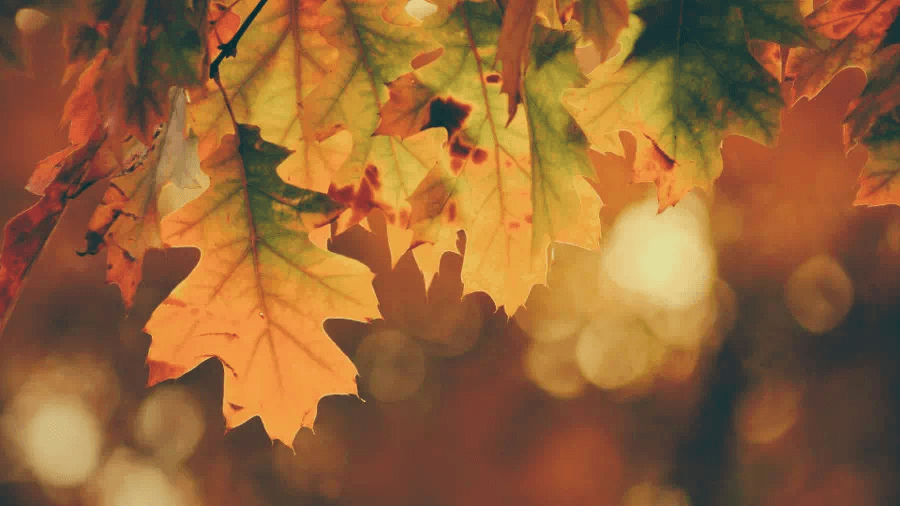 BlueRange_autumn_03